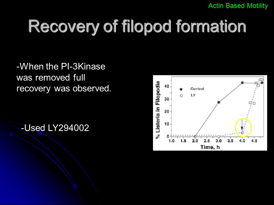 Recovery of filopod formation
