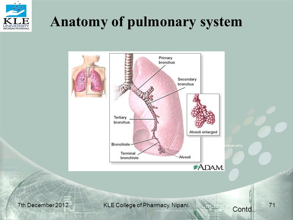 Anatomy of pulmonary system