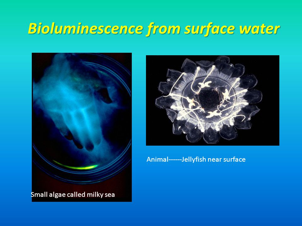 Bioluminescence from surface water