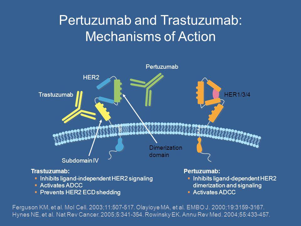 Pertuzumab and Trastuzumab: Mechanisms of Action