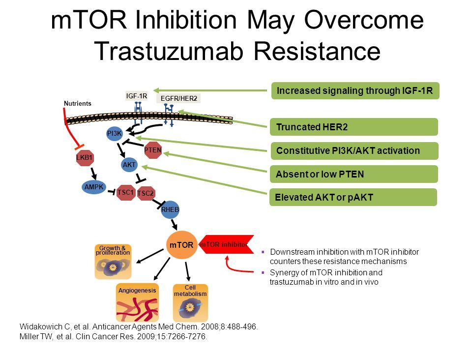 mTOR Inhibition May Overcome Trastuzumab Resistance