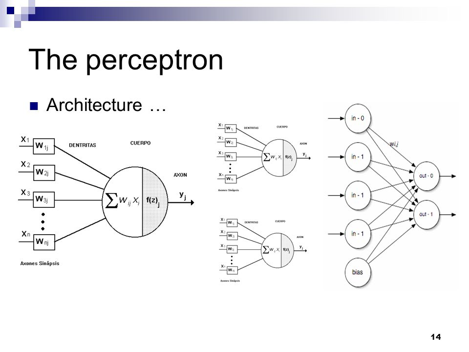 The perceptron Architecture …