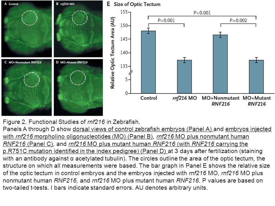 Figure 2. Functional Studies of rnf216 in Zebrafish.