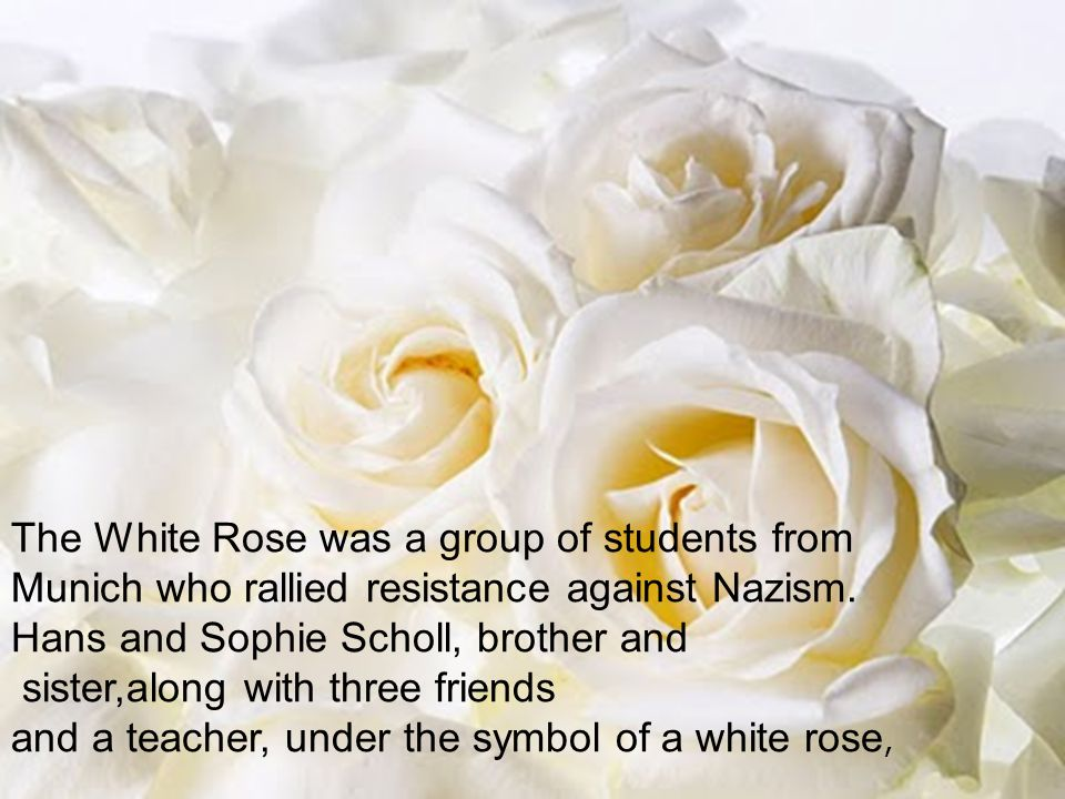 The White Rose was a group of students from