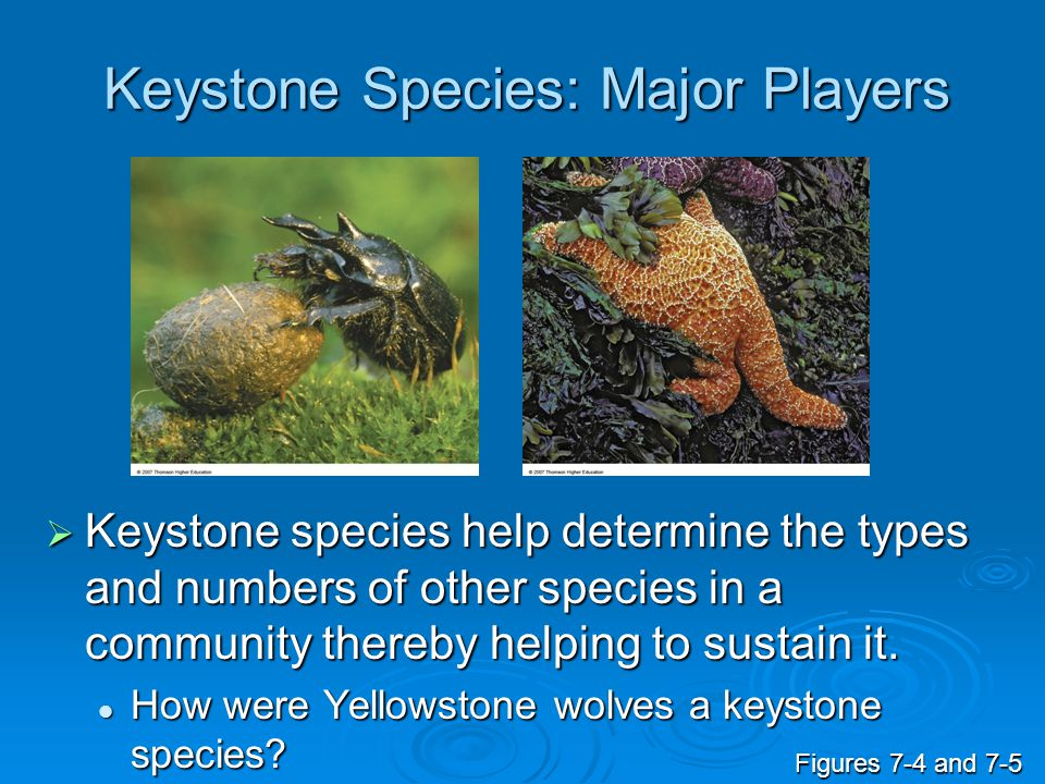 Keystone Species: Major Players