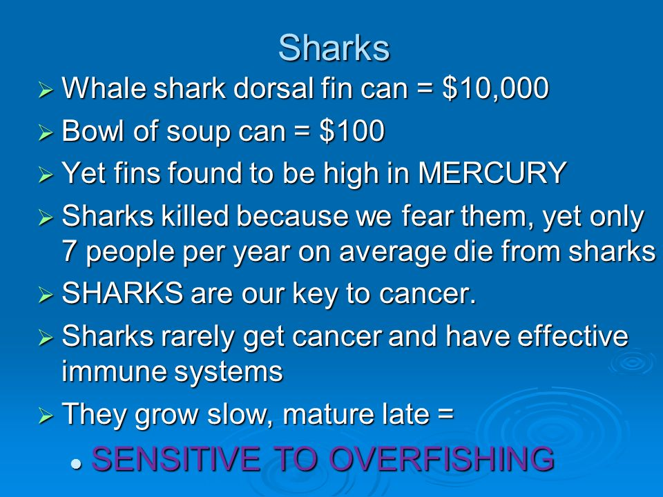 Sharks SENSITIVE TO OVERFISHING Whale shark dorsal fin can = $10,000