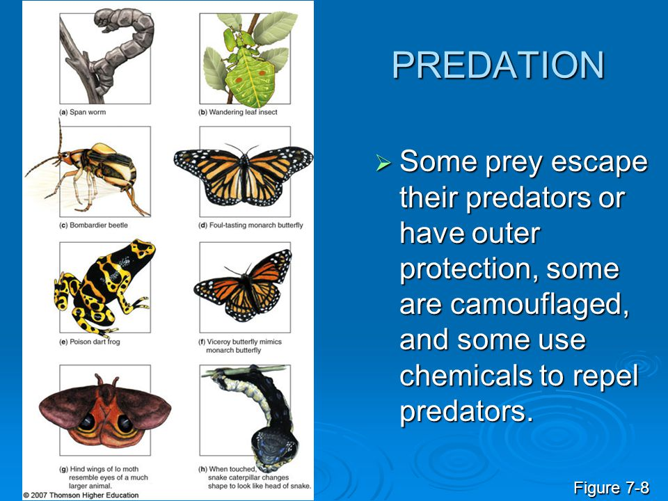 PREDATION Some prey escape their predators or have outer protection, some are camouflaged, and some use chemicals to repel predators.