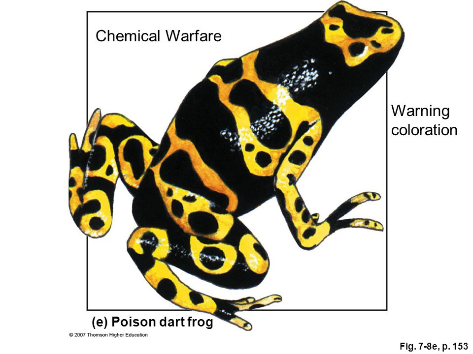 Chemical Warfare Warning coloration (e) Poison dart frog