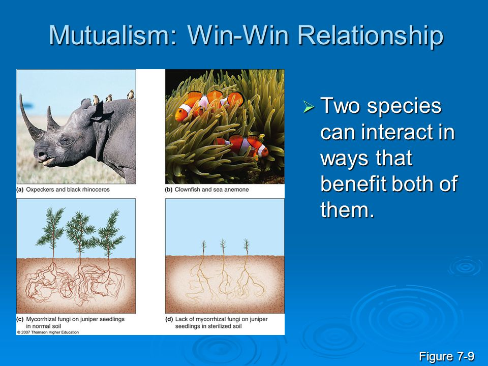 Mutualism: Win-Win Relationship