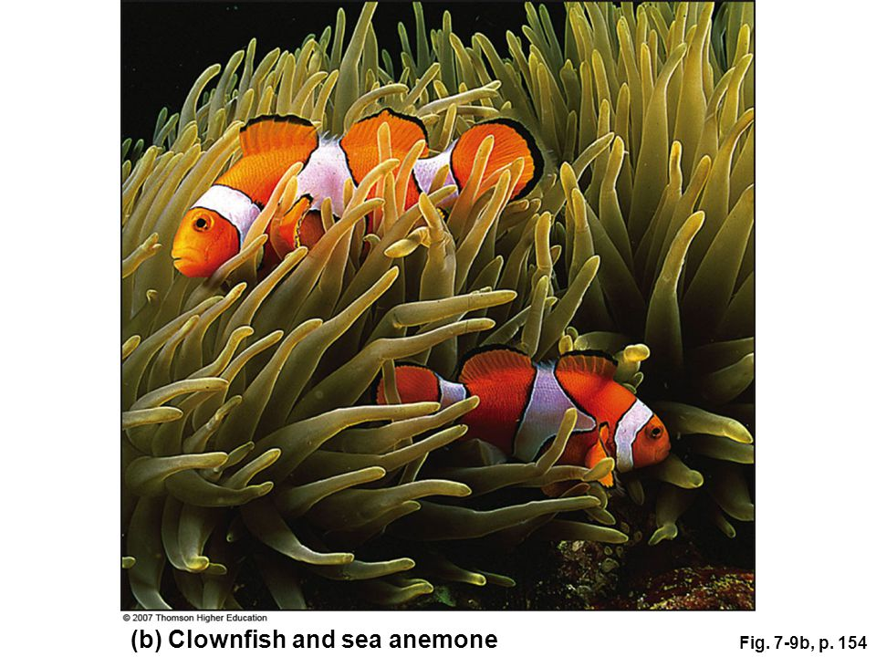 (b) Clownfish and sea anemone