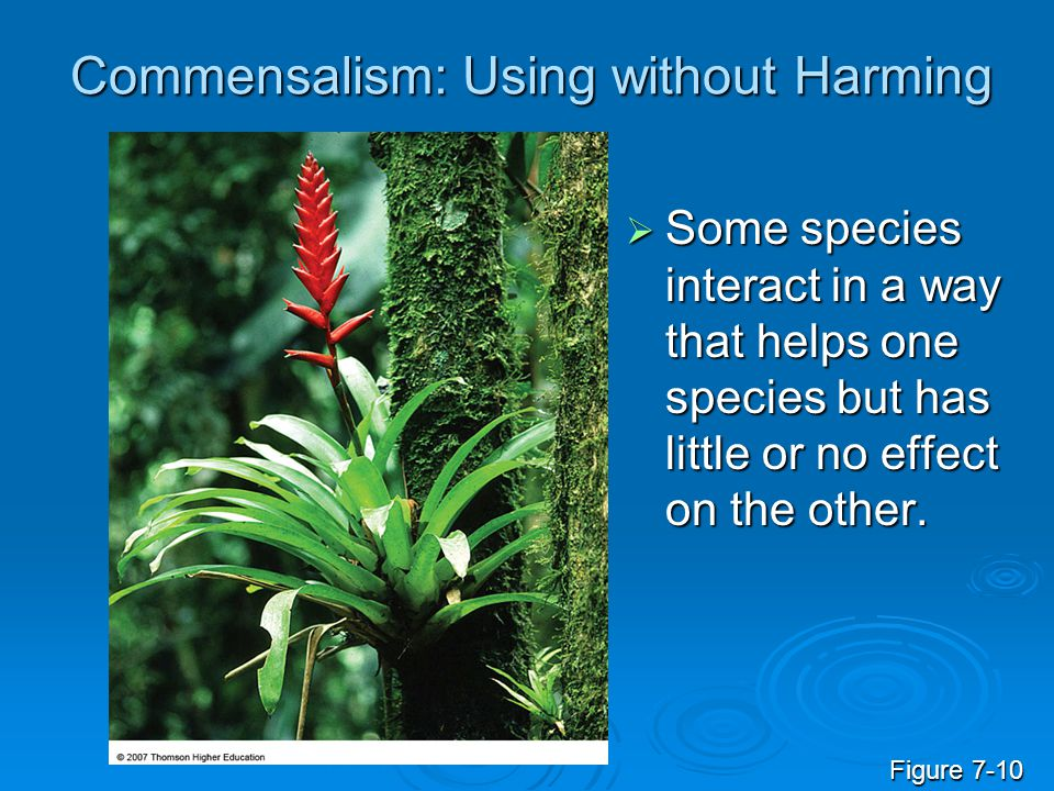 Commensalism: Using without Harming