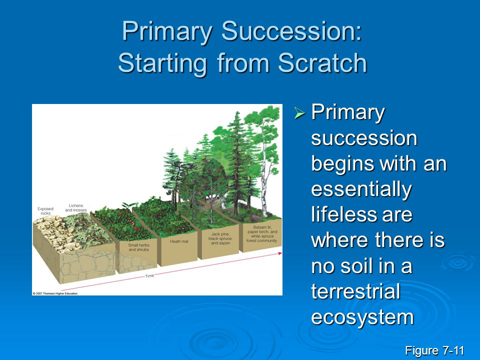 Primary Succession: Starting from Scratch