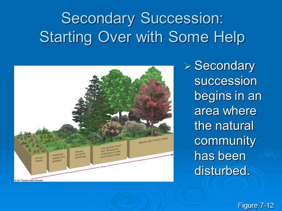 Secondary Succession: Starting Over with Some Help