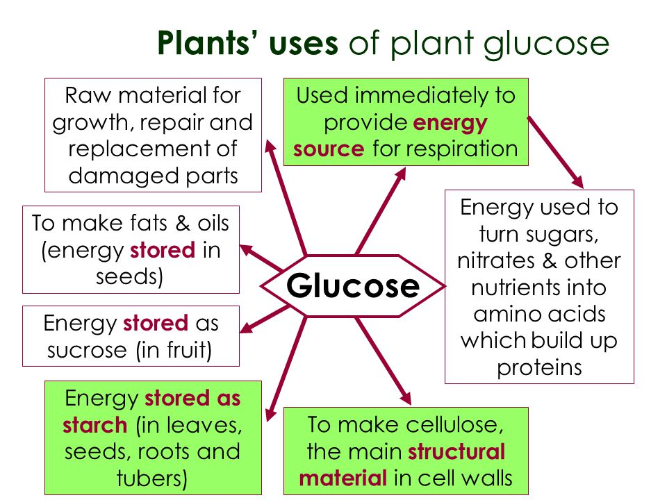 Plants' uses of plant glucose
