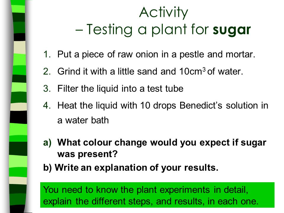 Activity – Testing a plant for sugar
