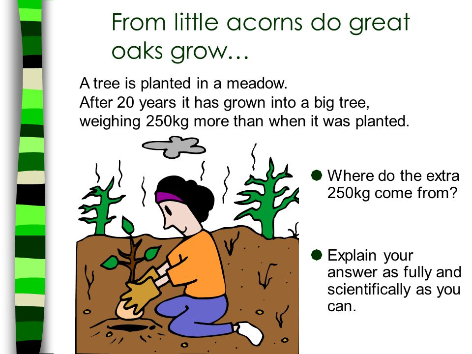 From little acorns do great oaks grow…