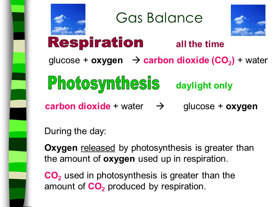 Gas Balance Respiration Photosynthesis all the time