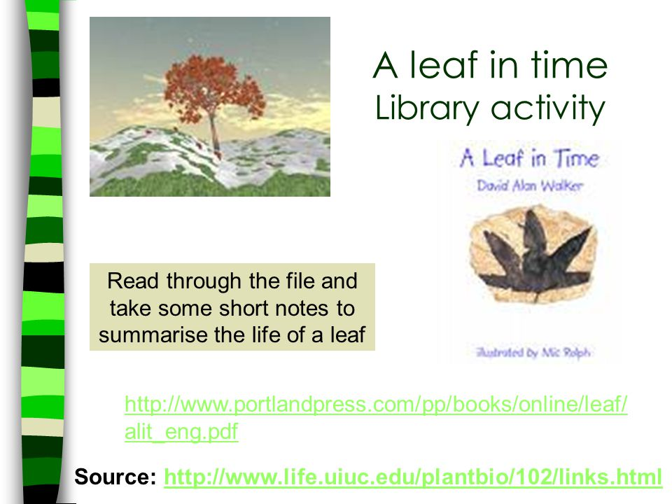 A leaf in time Library activity