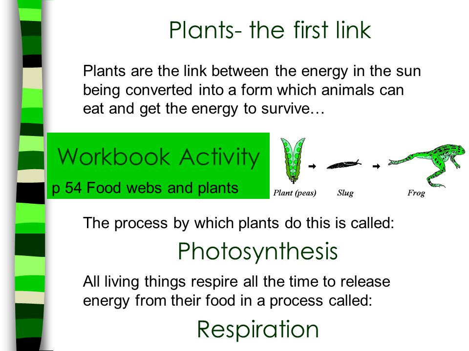 Plants- the first link Workbook Activity Photosynthesis Respiration