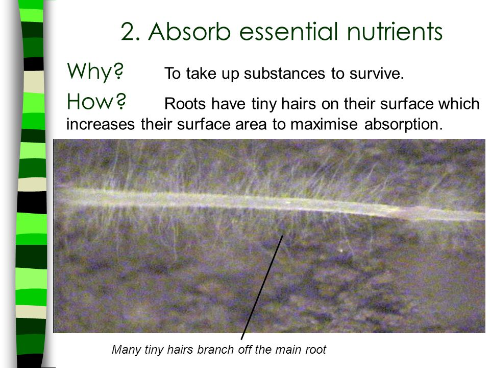 2. Absorb essential nutrients
