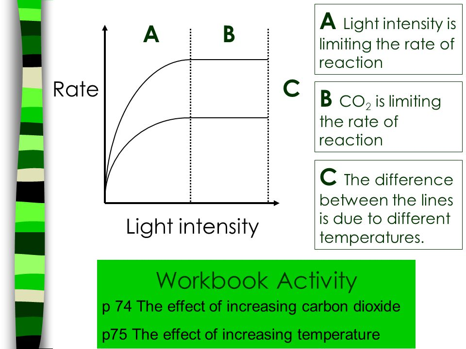A Light intensity is limiting the rate of reaction A B