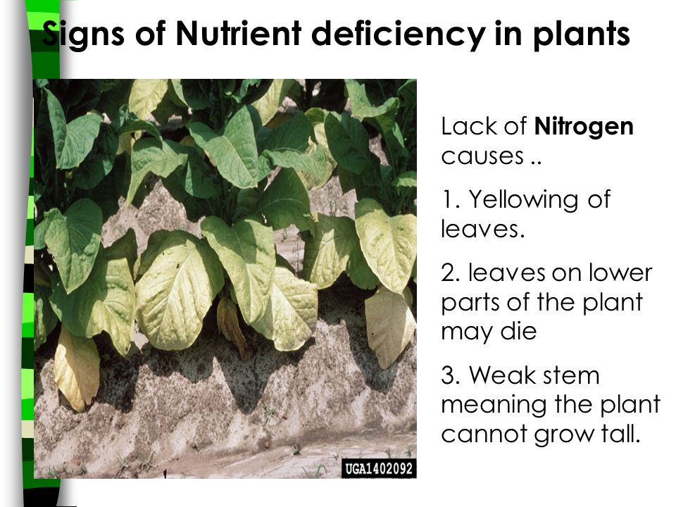 Signs of Nutrient deficiency in plants