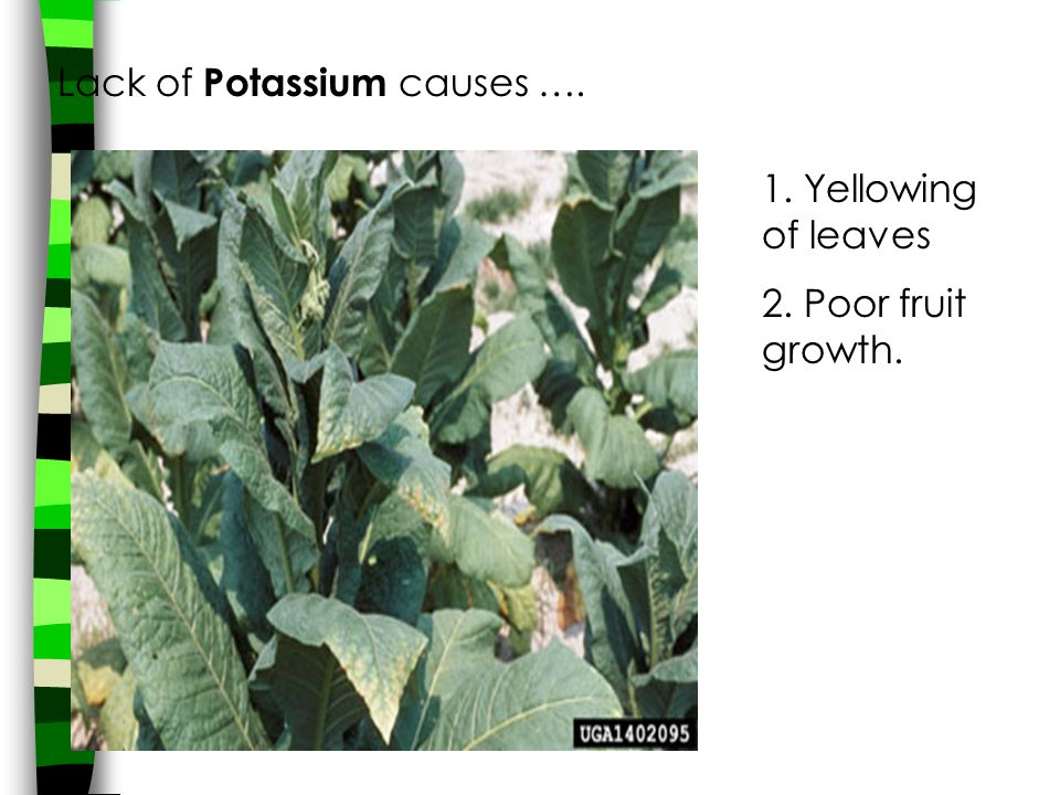 Lack of Potassium causes ….