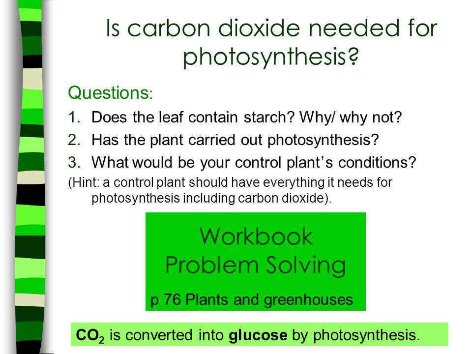 Is carbon dioxide needed for photosynthesis