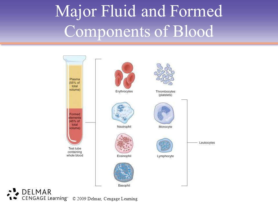 Major Fluid and Formed Components of Blood