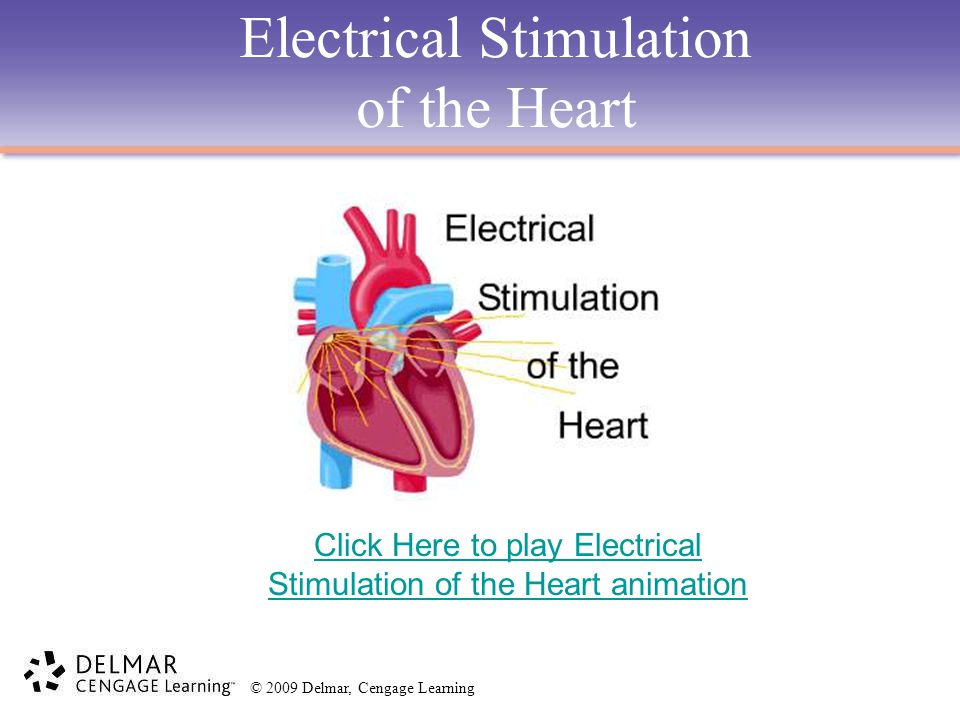 Electrical Stimulation of the Heart