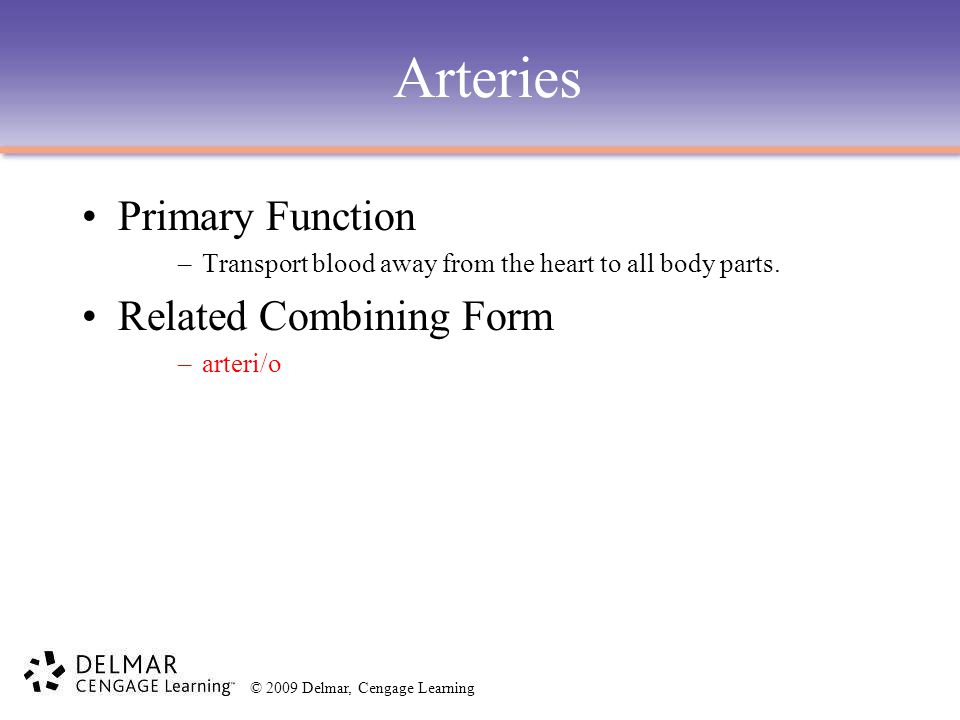 Arteries Primary Function Related Combining Form
