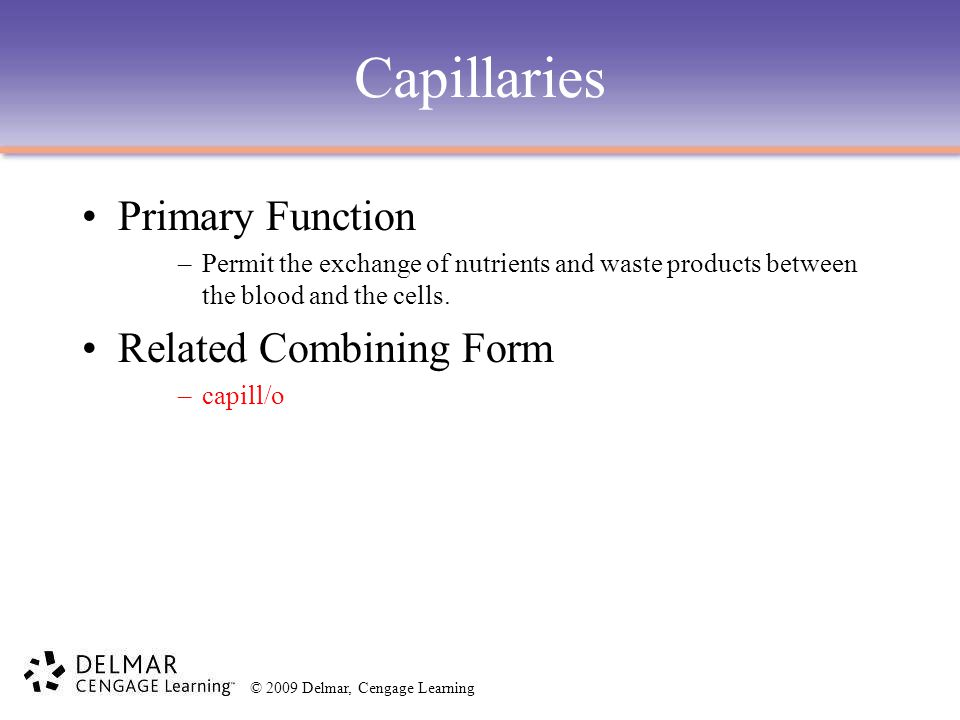 Capillaries Primary Function Related Combining Form