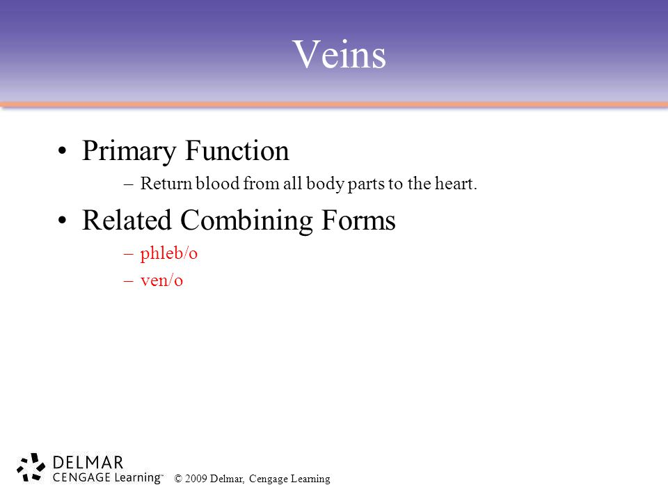 Veins Primary Function Related Combining Forms