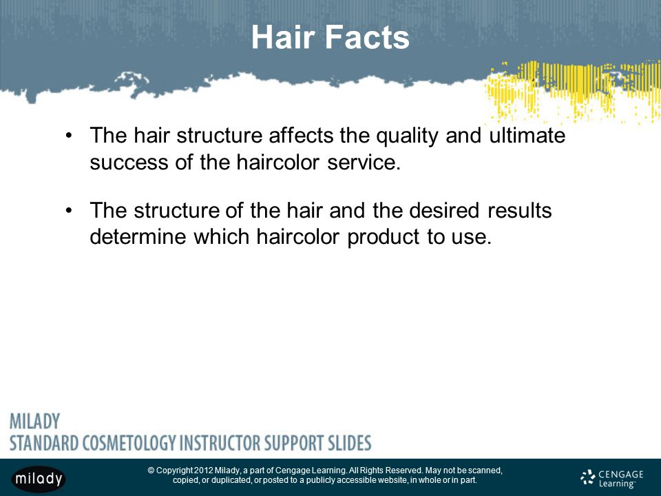 Hair Facts The hair structure affects the quality and ultimate success of the haircolor service.