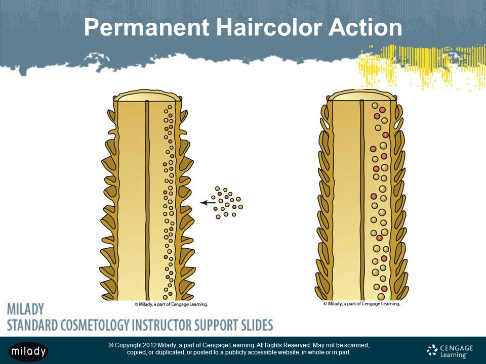 Permanent Haircolor Action