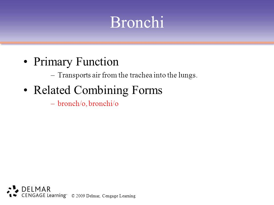 Bronchi Primary Function Related Combining Forms