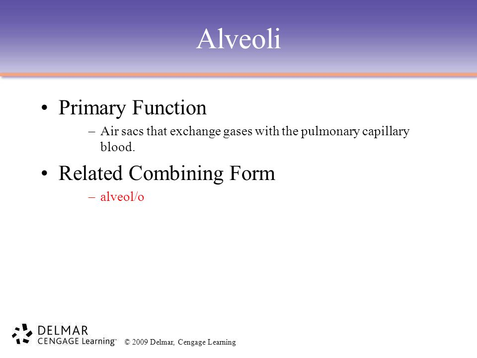 Alveoli Primary Function Related Combining Form