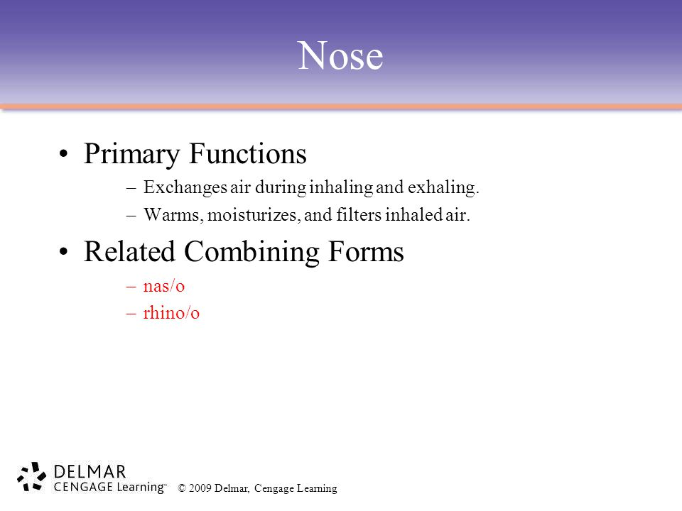 Nose Primary Functions Related Combining Forms