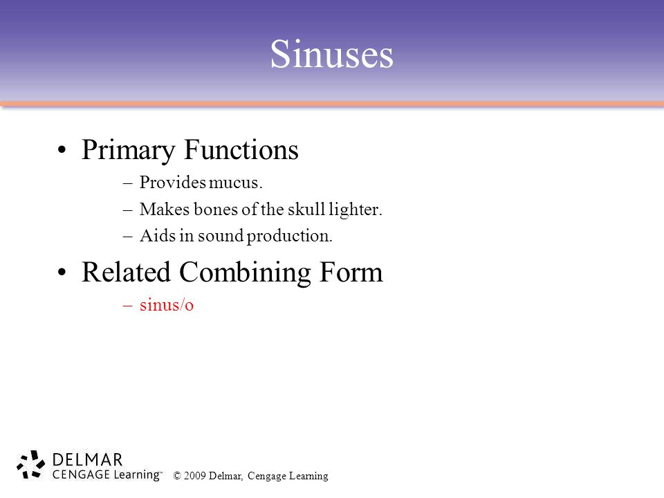 Sinuses Primary Functions Related Combining Form Provides mucus.
