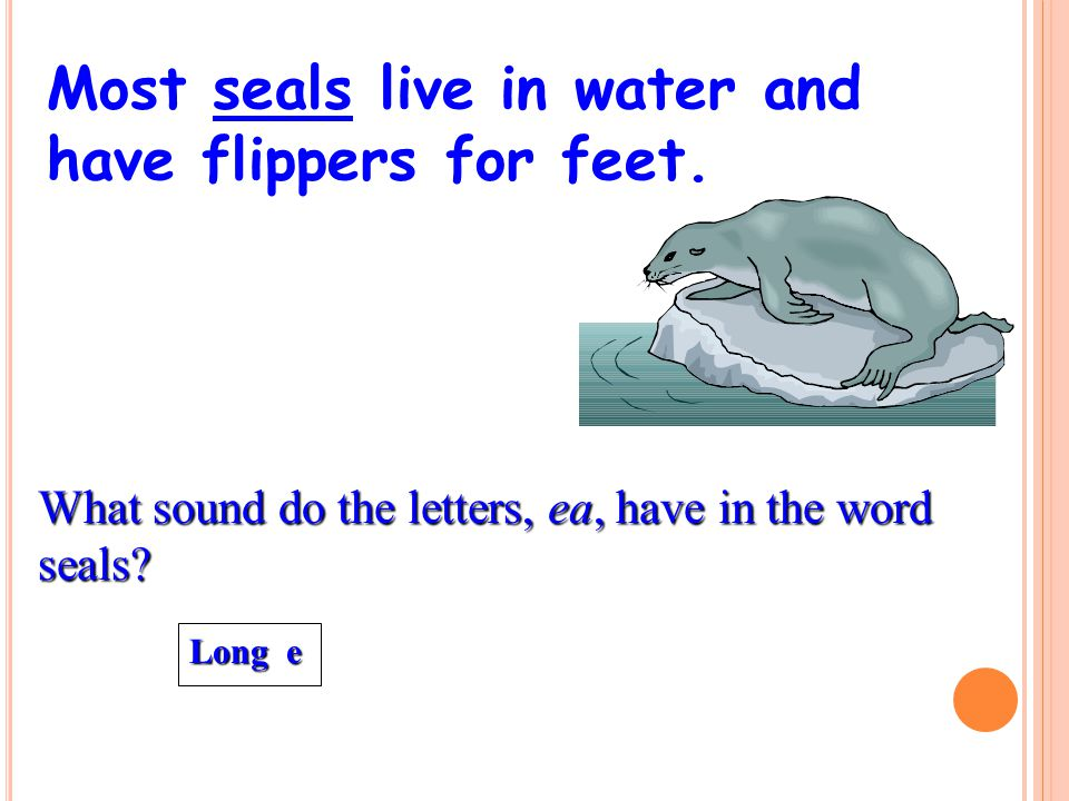 Most seals live in water and have flippers for feet.
