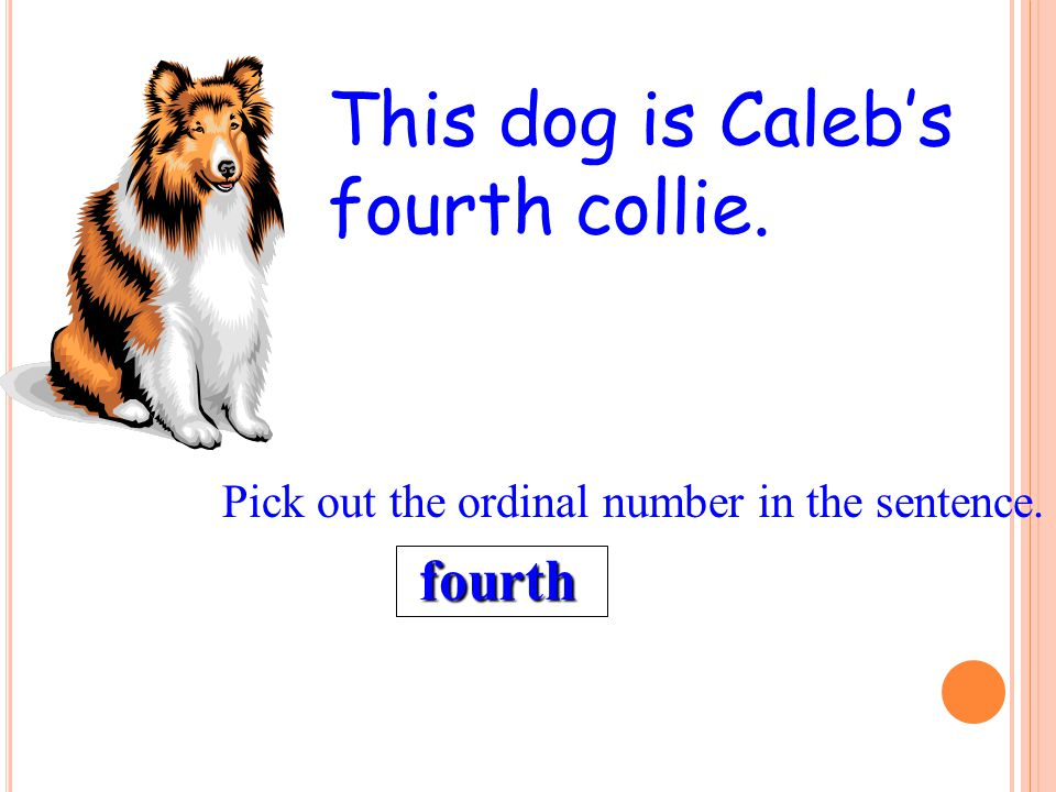 This dog is Caleb's fourth collie.