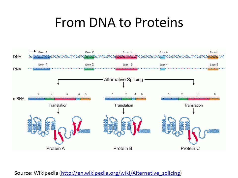 From DNA to Proteins Source: Wikipedia (http://en.wikipedia.org/wiki/Alternative_splicing)