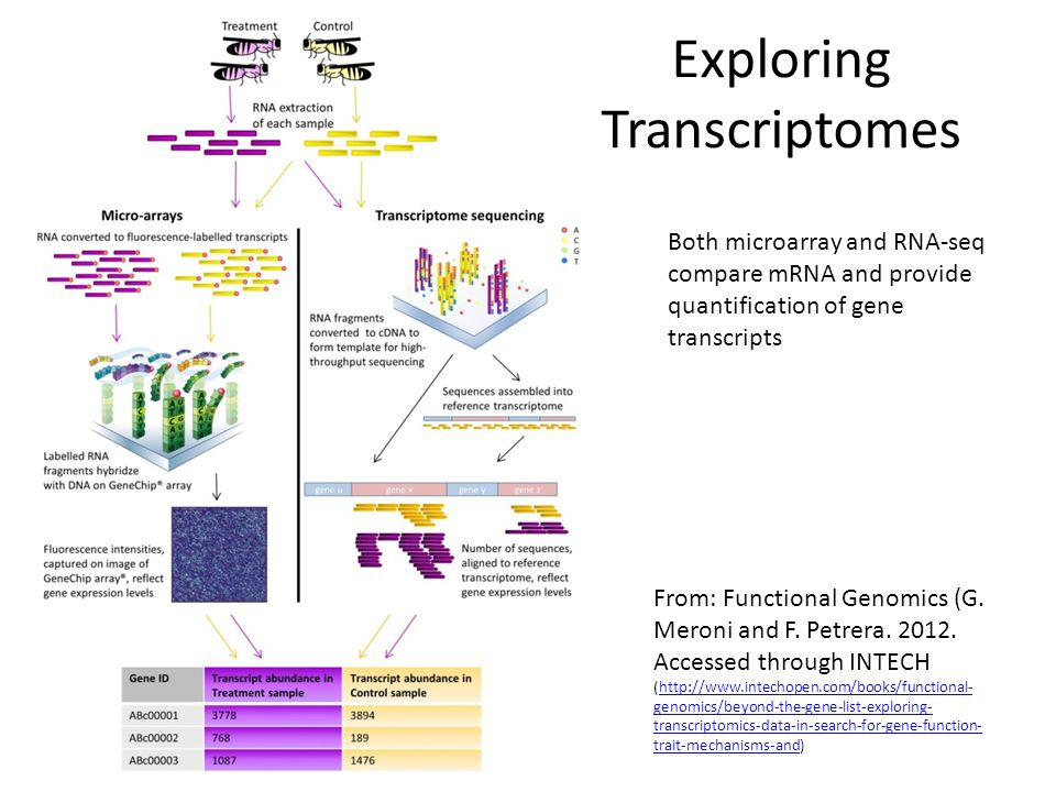 Exploring Transcriptomes