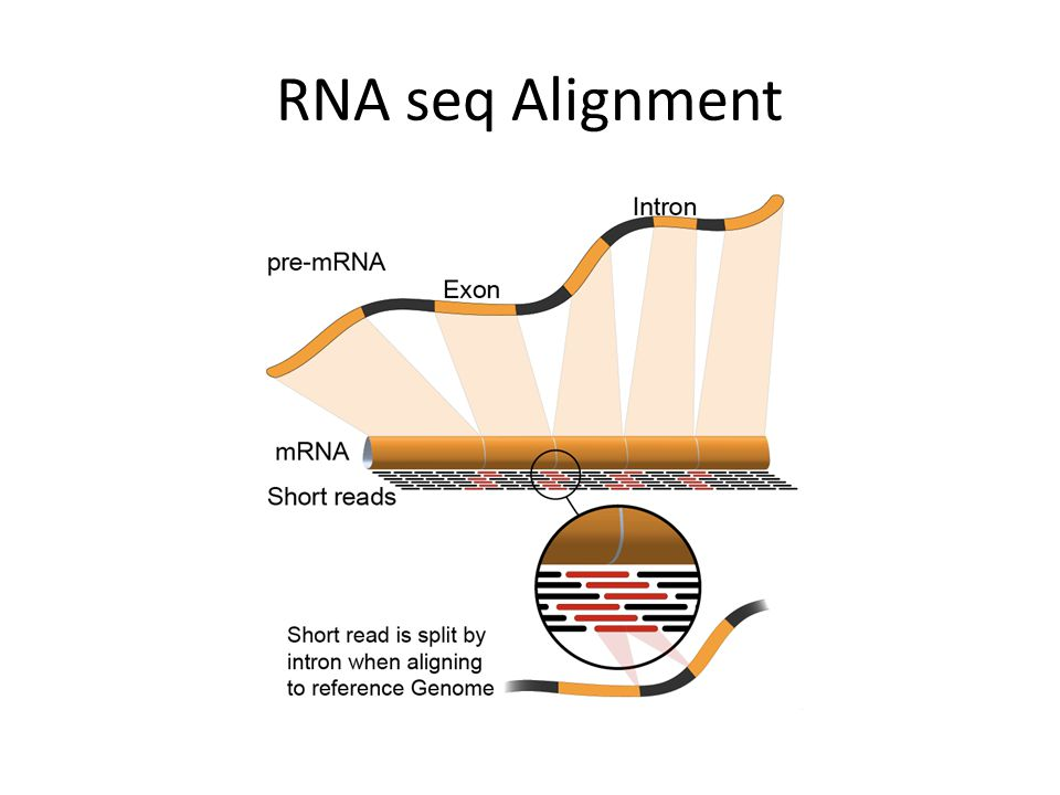 RNA seq Alignment