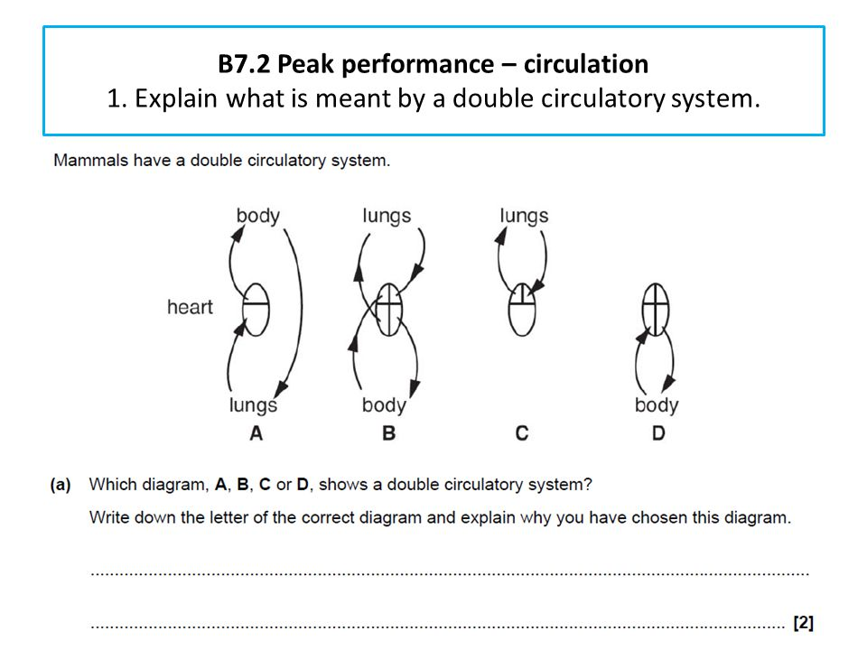 B7. 2 Peak performance – circulation 1