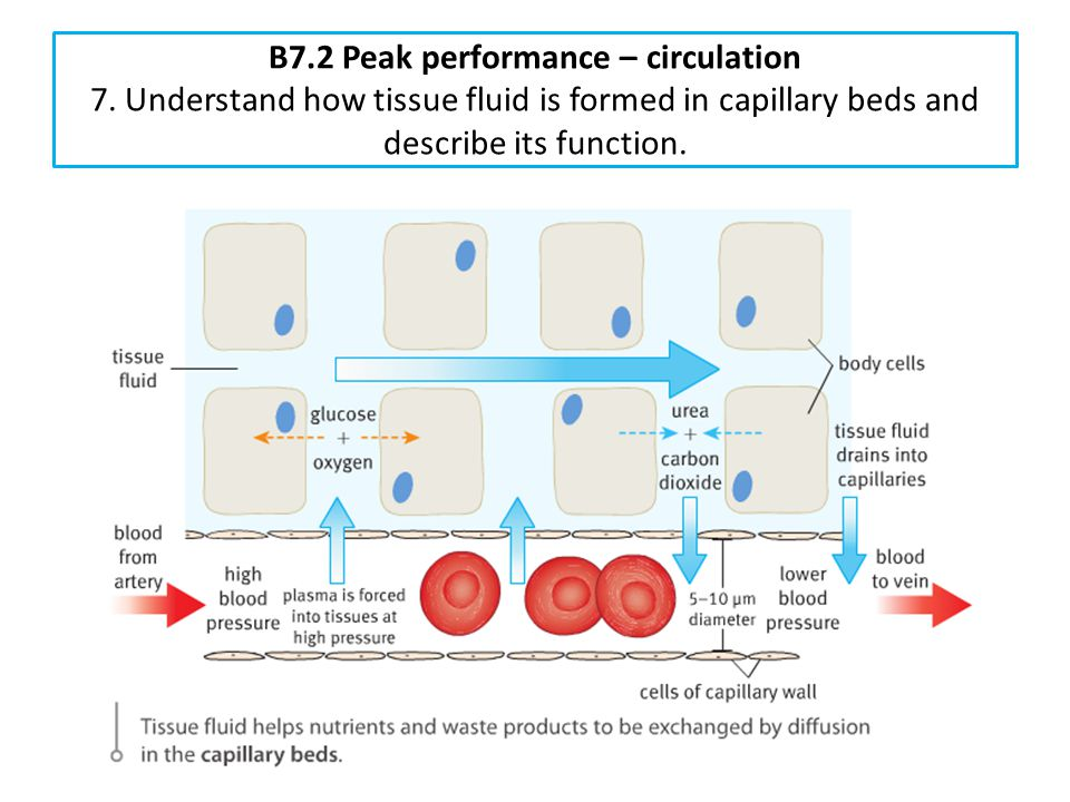 B7. 2 Peak performance – circulation 7