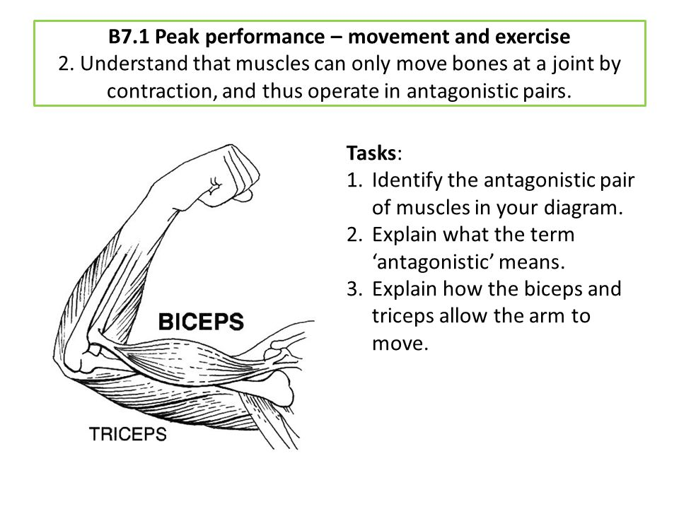 B7. 1 Peak performance – movement and exercise 2
