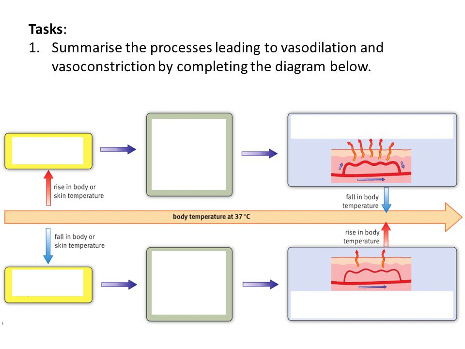 Tasks: Summarise the processes leading to vasodilation and vasoconstriction by completing the diagram below.