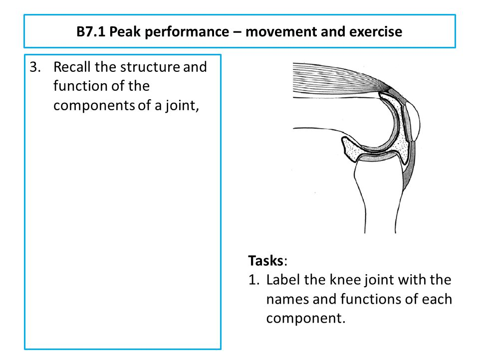 B7.1 Peak performance – movement and exercise