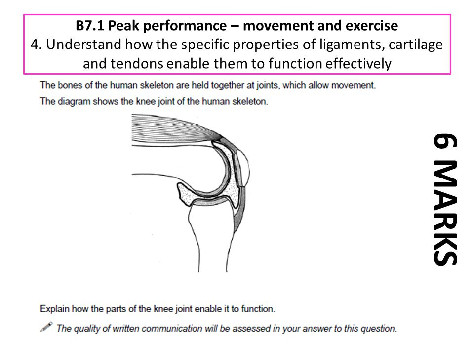 B7. 1 Peak performance – movement and exercise 4